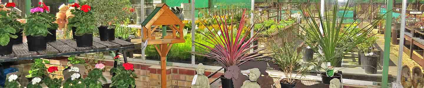 Layham Garden Centre other Plants
